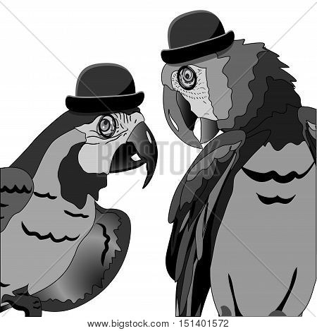 Illustration The Dispute of Two Parrots in Hat Bowler