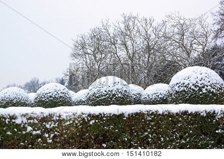 vegetable landscape under the snow, in a French garden (France)