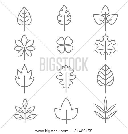 Leaf thin line vector icons. Linear leaves oak and maple illustration