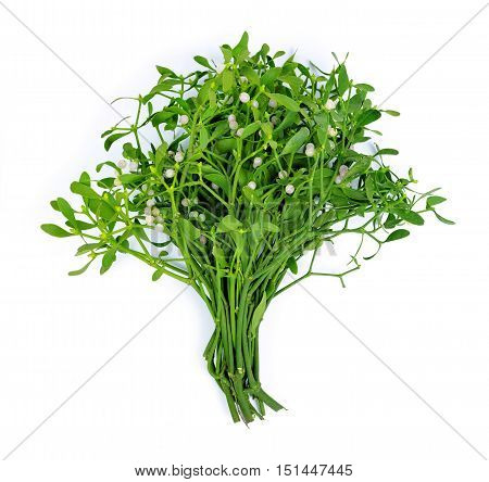 Bunch of mistletoe (Viscum album) isolated on white background