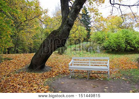White wooden bench on green trees and orange leaves pattern on the ground at the national park. Autumn fall beautiful colorful landscape nature background . Outdoor activity, recreation, walk concept