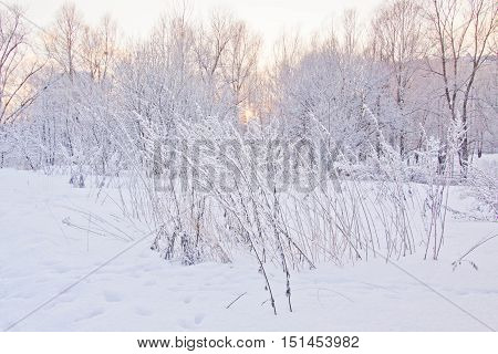 Trees Under The Snow At Sunset
