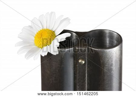 Flower of a camomile in a trunk of a fowling piece