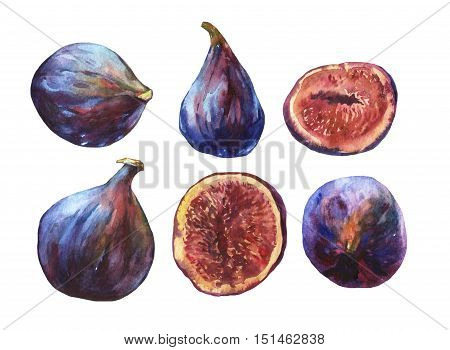 Set whole fresh figs and figs sliced in half, showing the red pulp and seeds inside. Watercolor hand painting illustration on isolate white background.