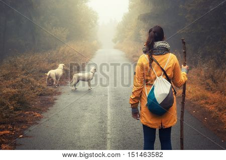 Young woman with her dogy hiking through a forest in the mountains of germany