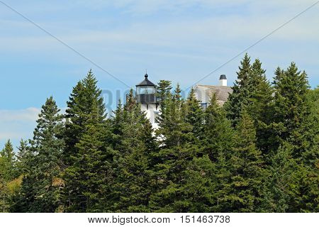 lighthouse towering above trees on the coast of Maine