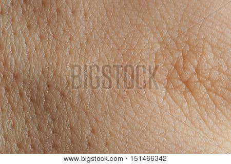 Texture Of Skin With Pores