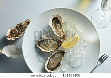 Fresh oysters on ice with lemon