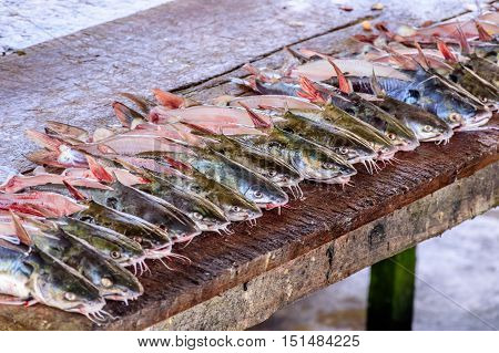 Prepared fish lined up on table at fish market in Caribbean town of Livingston, Guatemala, Central America