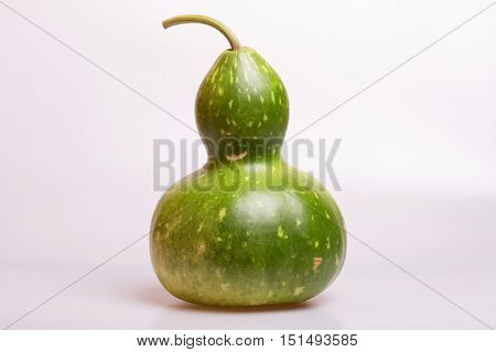 green calabash or Chinese Bottle Gourd is used by many cultures around the world for many different purposes, on a grey background