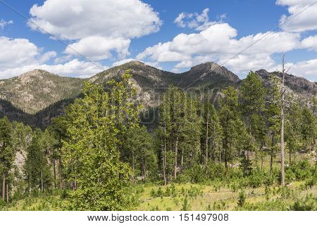 A scenic view of the Black Hills of South Dakota.
