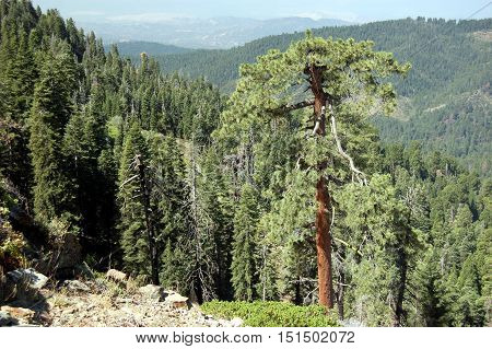 high plateau with redwood in Sequoia National Park