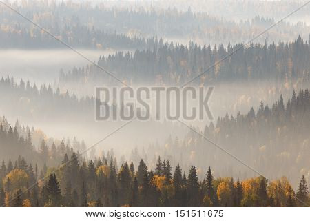 forest in fog, russian nature, mist in forest