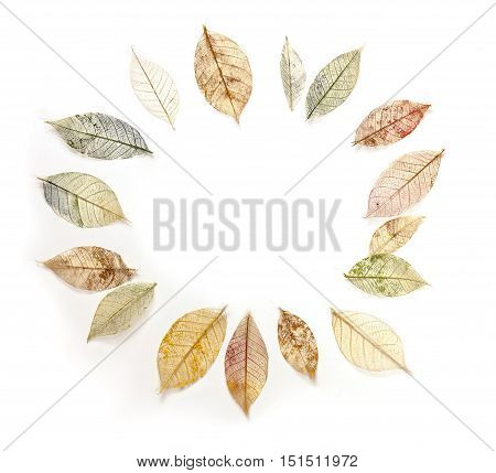 Photo of a frame, made up by hand painted skeleton leaves on a white background. A design for an autumn banner, with copyspace