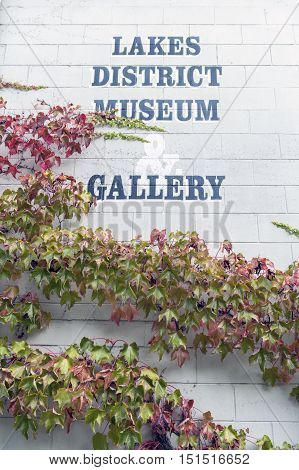 Arrowtown New Zealand - February 2016: Wild creepy vine Ampelopsis grape branches and leaves climbing on wooden wall of a museum in historic town of Arrowtown New Zealand