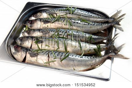 mackerel marinated in a metal bowl in a big supermarket