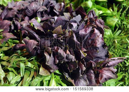 greens and purple basil  in showcase in the supermarket