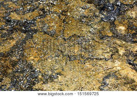 Sinter Deposits Colored By Hot-water Algae, Orakei Korako Cave