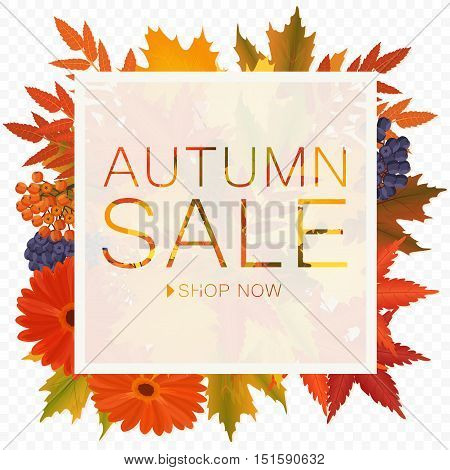Autumn sale discount banner on the transperant alpha background. Poster with autumn golden orange foliage leaves