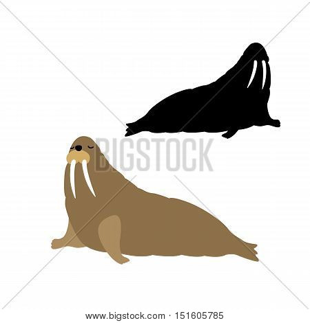 adult walrus vector illustration black silhouette set