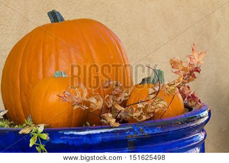 Blue planter displays pumpkins and dry leaves in autumn. Location is in Santa Fe New Mexico in October. Copy space on plain stucco wall.