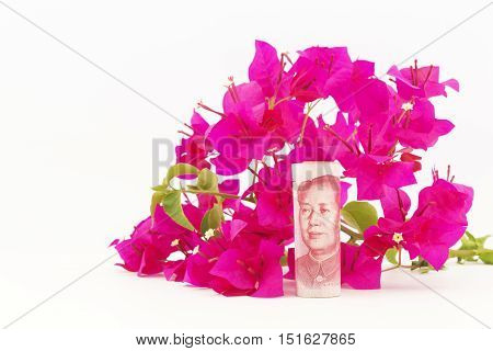 Bougainvillea flowers are fresh color behind Chinese yuan currency on white background. Fresh investments in China and growing Chinese savings and investments are growing.
