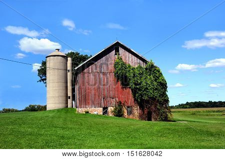 Old red wooden barn is becoming overgrown with ivy. Barn sits besides concrete silo in rural Wisconsin.