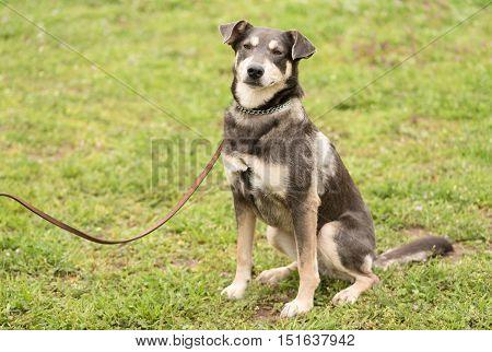 Closeup Dog Portrait