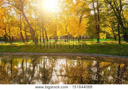 Autumn landscape of sunny autumn park lit by sunshine-autumn park with autumn trees and pond in soft light.Autumn landscape of autumn park with golden autumn trees and pond. Autumn park in sunny light