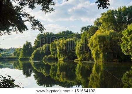 Weeping willow trees on the shore on the banks of the river with reflex on water