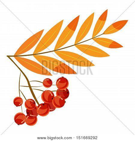 Rowanberry branch icon. Cartoon illustration of rowanberry branch vector icon for web