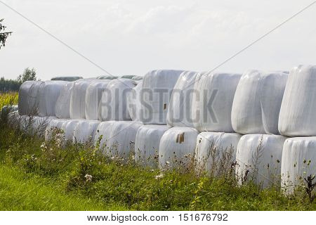 bales of hay animal feed for winter
