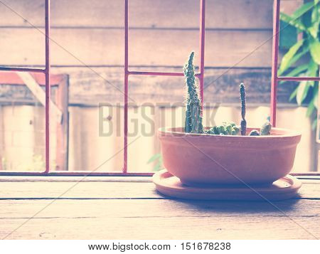 small cactus in brown flowerpot on wooden table near window vintage filter effect