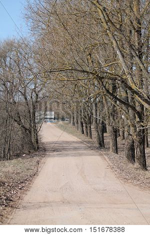 beautiful sand road guided through spring alley in warm gaily day