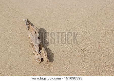 old wood to rock stone on sand beach show survival concept