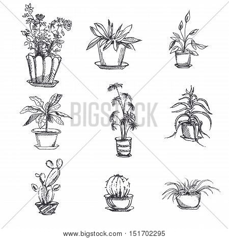 Hand drawn houseplants in pot set. Plant art graphic, element floral houseplant. Vector illustration.