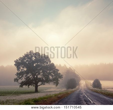 Autumn Landscape with Silhouettes of Trees and Road in Fog. Morning Scenery at Sunrise with Mist. Toned and Filtered Instagram Styled Photo with Copy Space. Mystical Nature Background.
