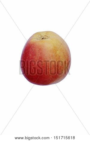 Pacific Rose Apple