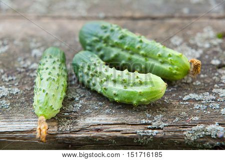 tasty ripe green cucumbers on a wooden table