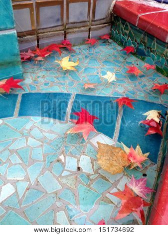 Carmin red japanese maple leaves in blue pool.