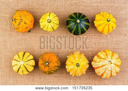 Two Neat Rows Of Different Ornamental Gourds