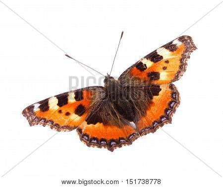 A Small Tortoiseshell (Aglais urticae) butterfly isolated on white background.