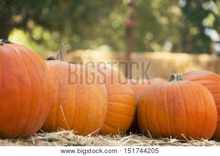 Large pumpkins on hay for sale, pumpkin patch