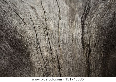 Wooden texture macro photo. Brown and grey wood background. Grey old tree without skin. Curves and lines on rustic timber. Rough timber wood backdrop. Grey old tree in forest. Natural image for design