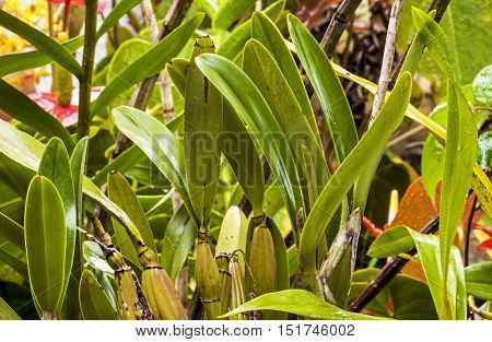 Close Up Of Different Species Of Wet Orchid Leaves