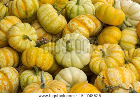 Miniature Pumpkins on a Pumpkin Patch stand in Northern California