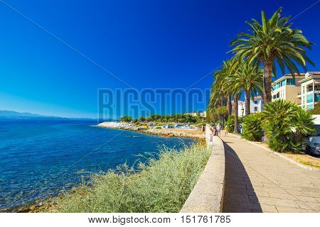 Ajaccio old city center coastal cityscape with palm trees and typical old houses Corsica France Europe.