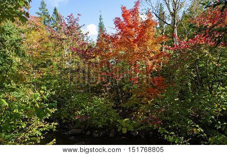Changing the colors of leaves in Fall