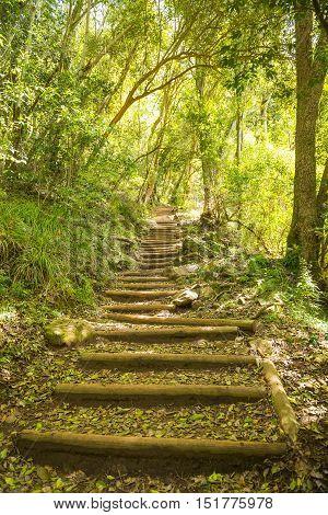 Walking Trail Stairway On Table Mountain