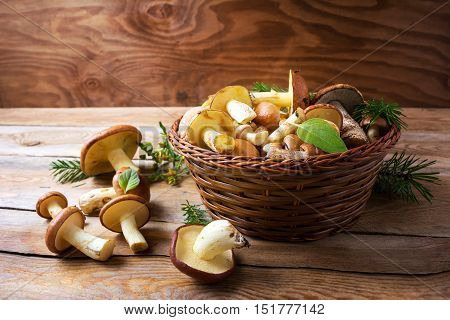 Forest picking edible mushrooms in wicker basket on wooden background. Fresh raw mushrooms on the table. Leccinum scabrum